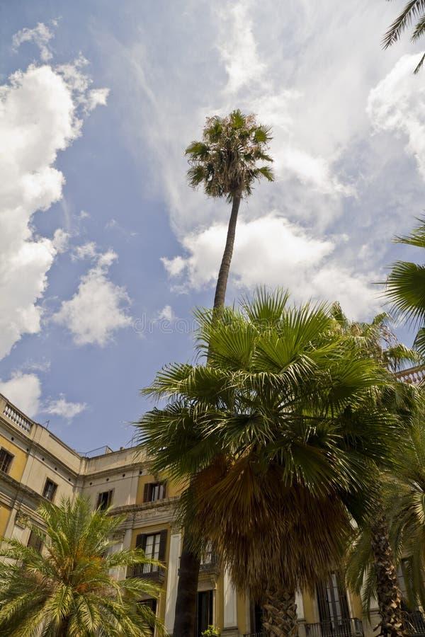 Drzewka palmowe na Placa Reial w Barcelona obrazy stock