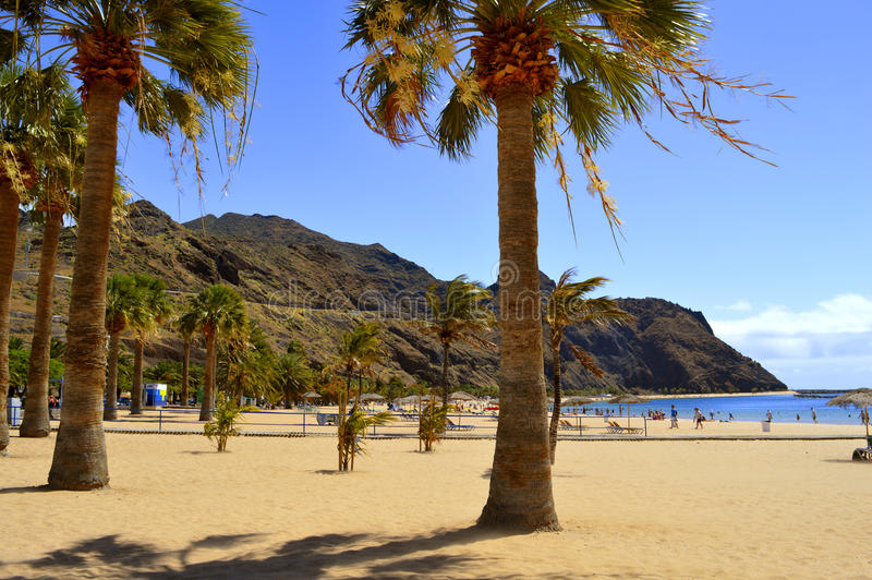 Drzewka palmowe na Playa De Las Teresitas plaży zdjęcie stock