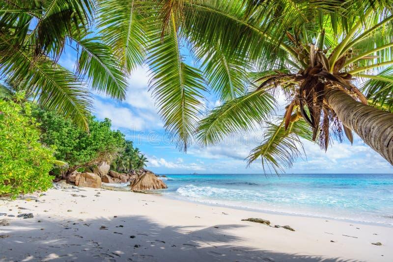 Drzewka palmowe na raju wyrzucać na brzeg przy anse patates, losu angeles digue, Seychelles 3 obraz royalty free