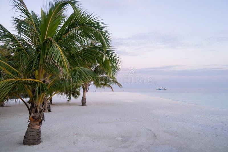 Drzewka palmowe nad białą piasek łodzią motorową nad turkusową laguną przy Maldives przy zmierzchem i plażą fotografia stock