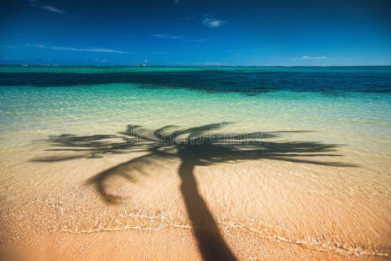 Drzewka palmowe ocieniają na tropikalnym plażowym Punta Cana, Dominikański Ponowny obrazy royalty free