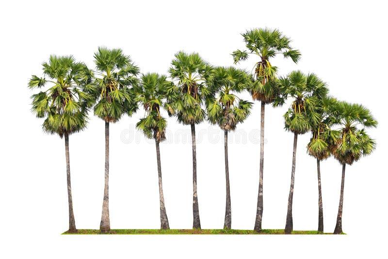 Drzewka palmowe odizolowywający na białym tle obrazy stock