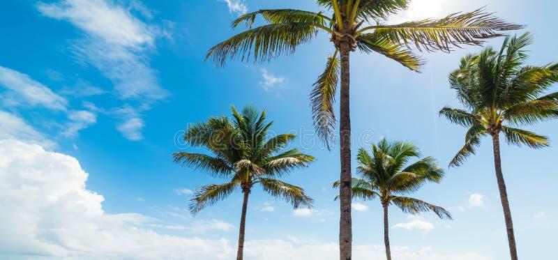 Drzewka palmowe pod niebieskim niebem w fort lauderdale plaży zdjęcie stock