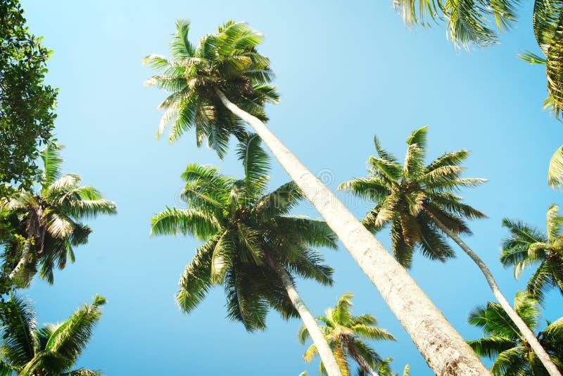Drzewka palmowe przeciw niebieskiemu niebu, drzewka palmowe przy tropikalnym wybrzeżem, rocznika tonujący i kokosowy drzewo styli zdjęcie royalty free