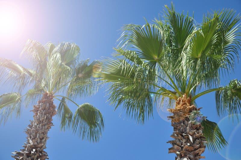 Drzewka palmowe przeciw niebieskiemu niebu, drzewka palmowe przy tropikalnym wybrze?em, rocznika tonuj?cy i kokosowy drzewo styli zdjęcia royalty free