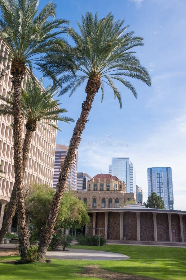 Drzewka palmowe przed szkło budynku d w w centrum feniksie Arizona fotografia stock