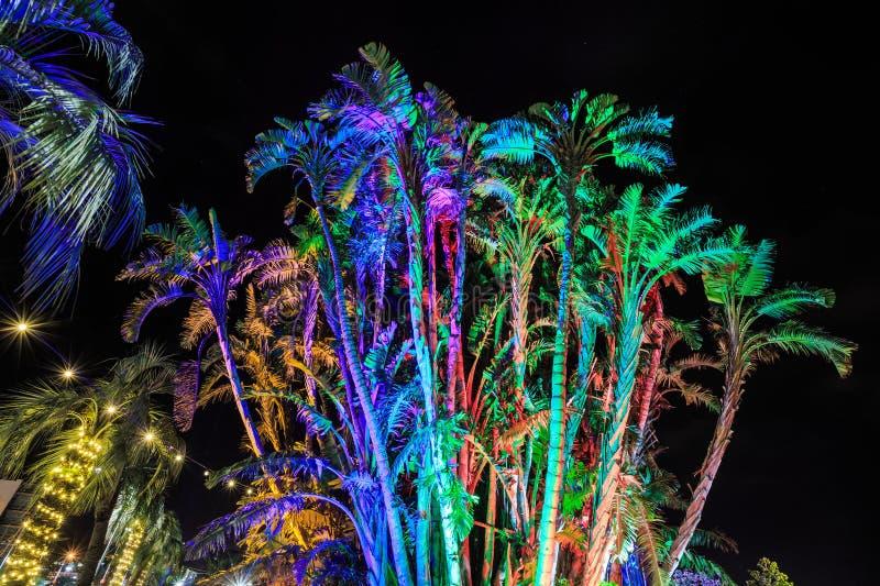 Drzewka palmowe przy nocą, żywo zaświecającą z barwionymi światłami zdjęcia stock
