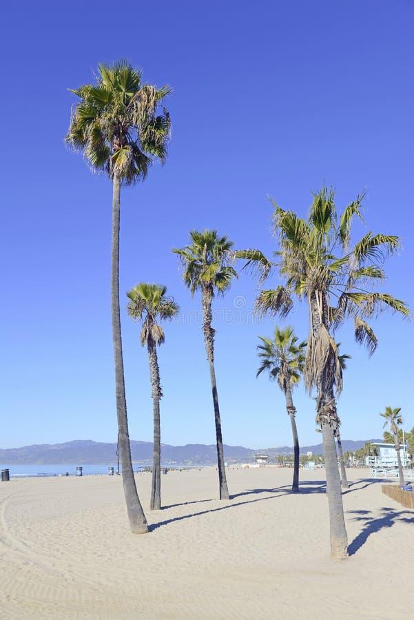 Drzewka Palmowe przy plażą zdjęcie stock