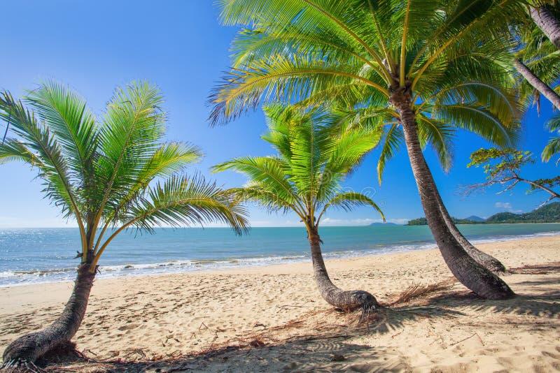 Drzewka palmowe przy tropikalną Palmową zatoczką wyrzucać na brzeg w północnym Queensland zdjęcia royalty free