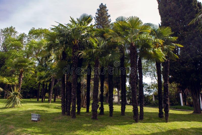 Drzewka palmowe przy zmierzchem w parku zdjęcia stock