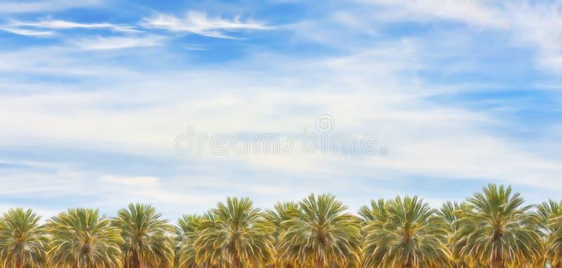 Drzewka Palmowe w Arizona pustyni zdjęcie royalty free