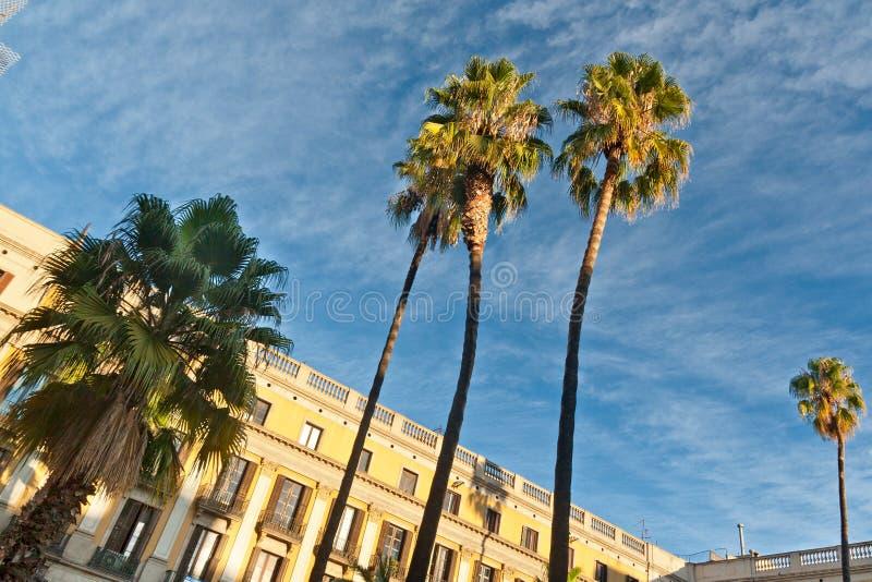 Drzewka palmowe w Barcelona obraz royalty free