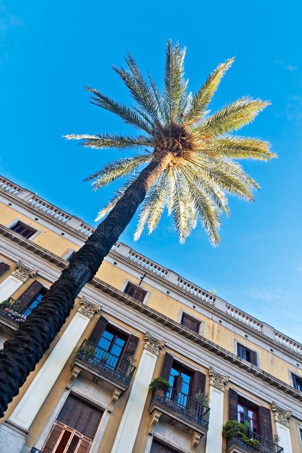 Drzewka palmowe w Barcelona obraz stock