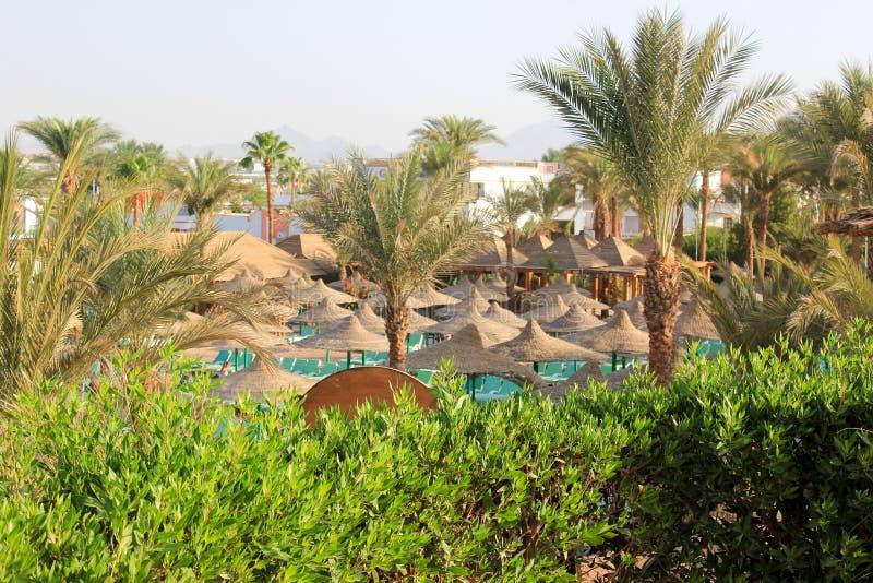 Drzewka palmowe w Egypt roślinności pięknym krajobrazie obrazy royalty free