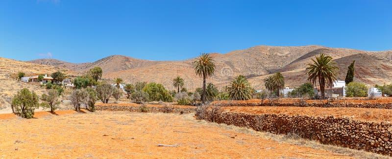 Drzewka palmowe w Fuerteventura zdjęcia stock