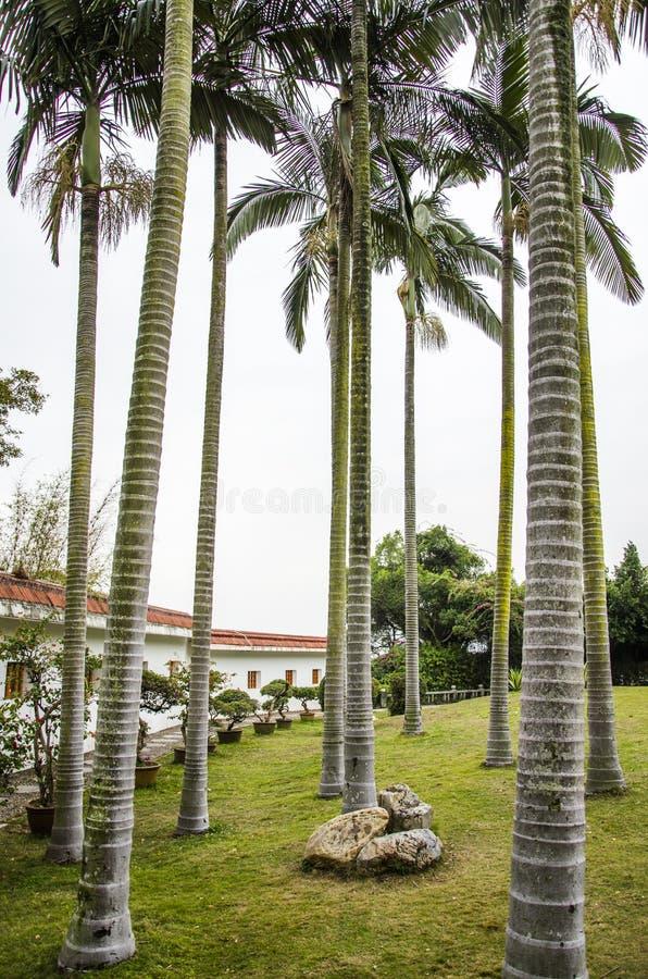 Drzewka palmowe w ogródzie obrazy stock