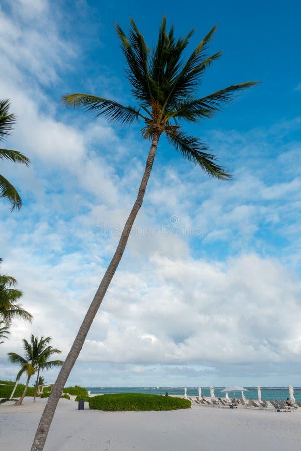 Drzewka Palmowe w Punta Cana plaży obrazy royalty free