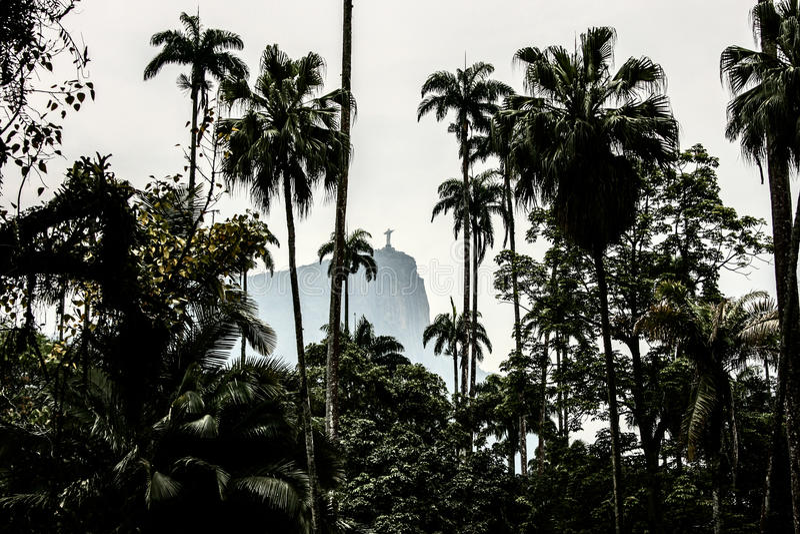 Drzewka palmowe w Rio zdjęcia stock