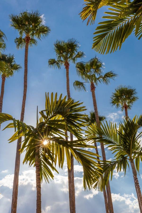 Drzewka palmowe wzd?u? Tampa Riverwalk w Tampa Floryda zdjęcie stock