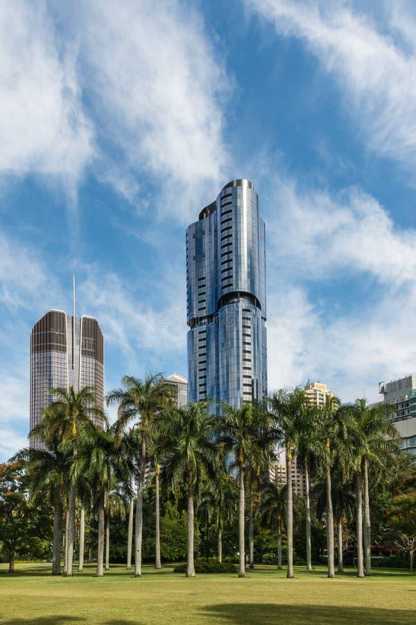 Drzewka palmowe z drapaczami chmur w Brisbane CBD zdjęcie stock