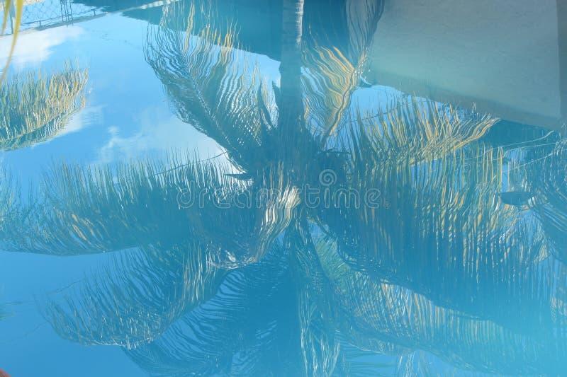 Drzewka Palmowego odbicie obraz stock