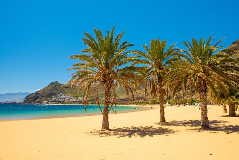 Drzewka palmowego Playa lasów Teresitas plaża, Tenerife zdjęcie royalty free
