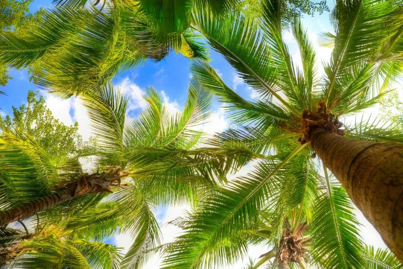 drzewko palmowe obraz royalty free