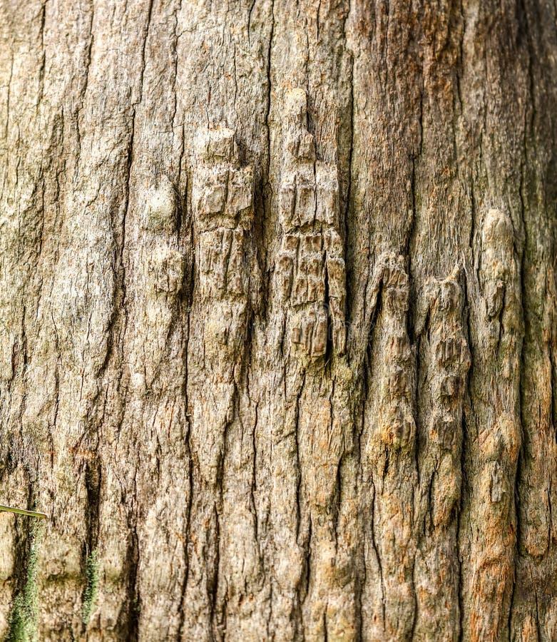 Drzewko palmowe bagażnik jako tło zdjęcie royalty free