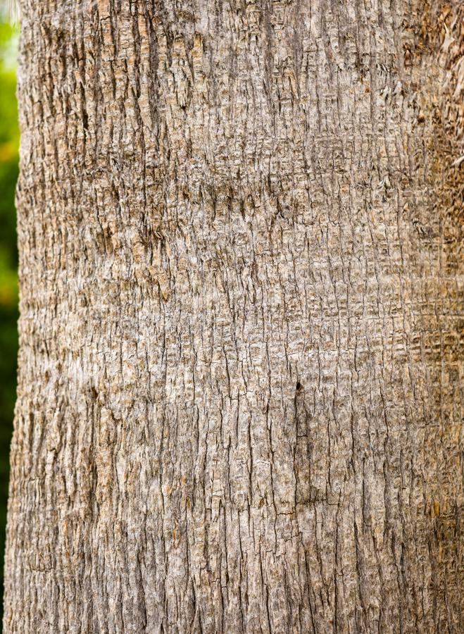 Drzewko palmowe bagażnik jako tło fotografia stock