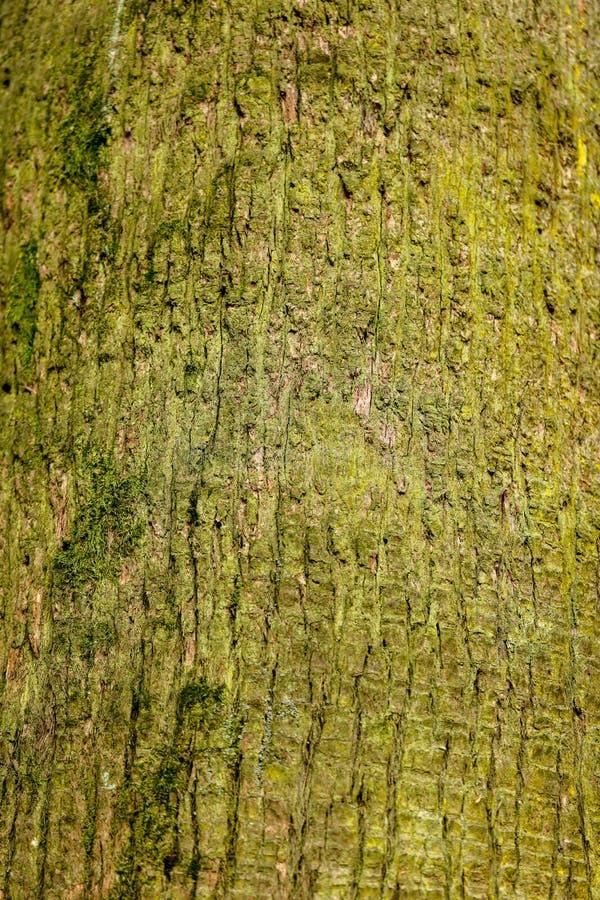 Drzewko palmowe bagażnik jako tło zdjęcia stock