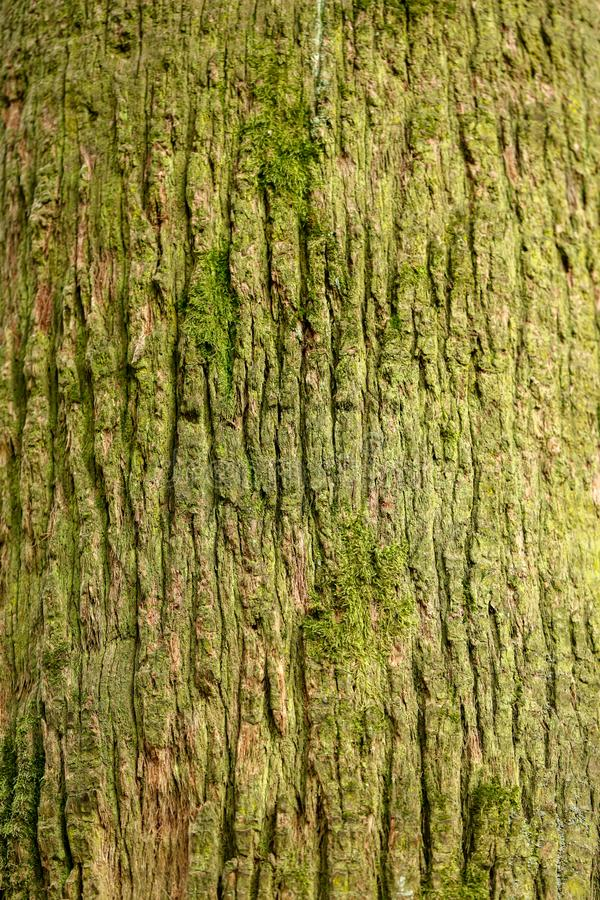 Drzewko palmowe baga?nik jako t?o zdjęcie stock