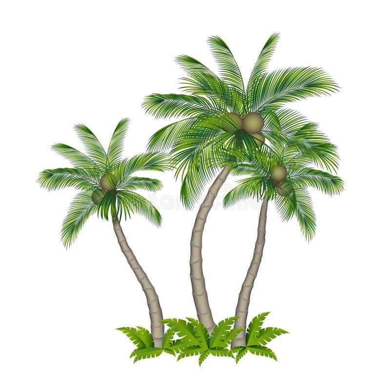 Drzewko palmowe barwiący obrazy stock
