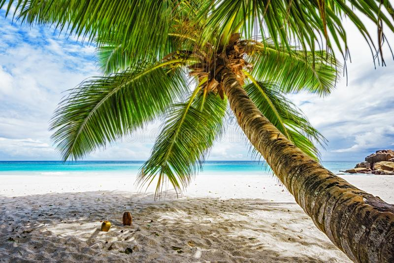 Drzewko palmowe, biały piasek, turkus woda przy tropikalną plażą, raj przy Seychelles 5 fotografia stock