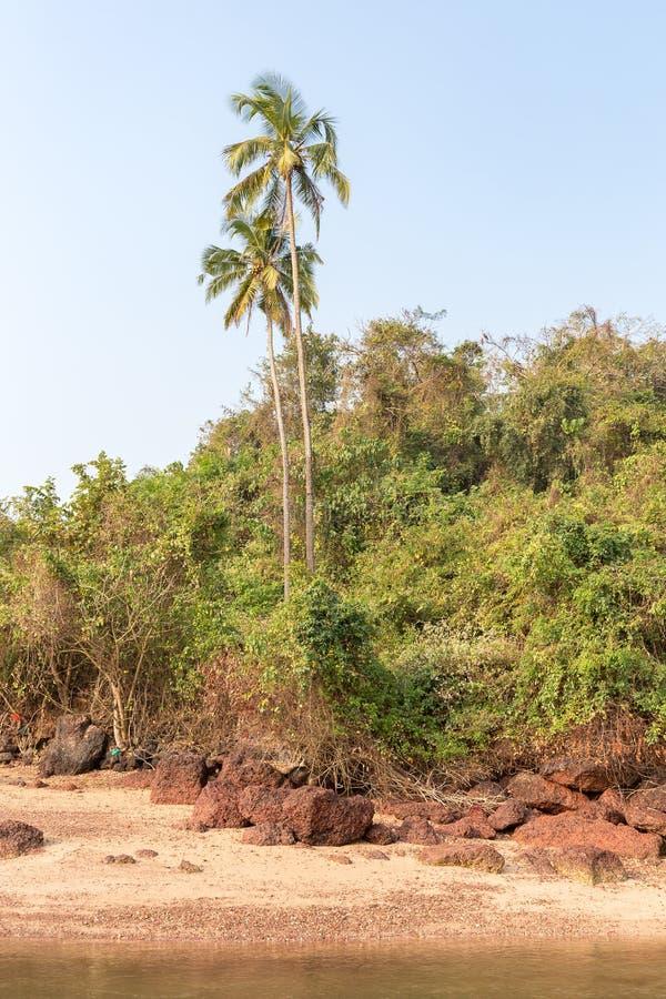 Drzewko palmowe i dżungla na skalistym wybrzeżu, Agonda plaża, Goa obraz royalty free