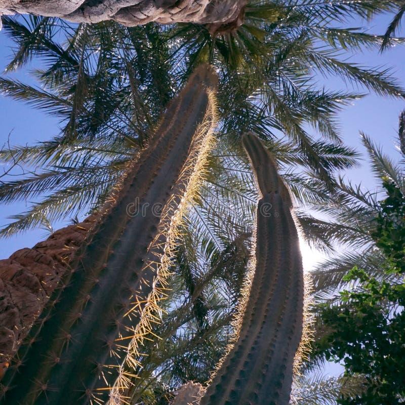 Drzewko palmowe i kaktus w Brisbane, Australia zdjęcie stock