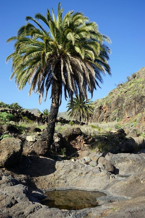 Drzewko palmowe i staw obraz royalty free