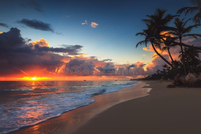 Drzewko palmowe i tropikalna pla?a przy wsch?d s?o?ca karaibska egzotyczna wyspa raj zdjęcia stock