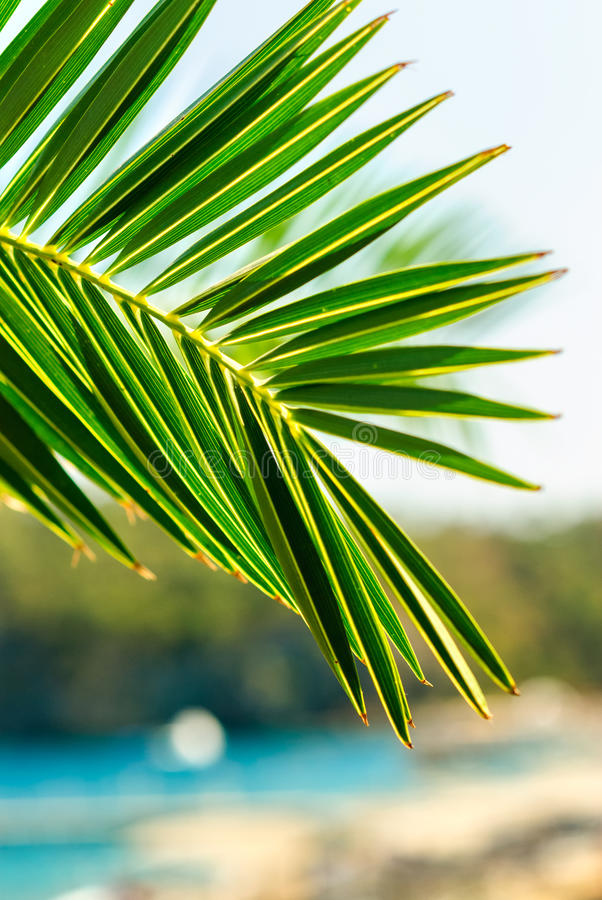 Download Drzewko palmowe liścia tło zdjęcie stock. Obraz złożonej z pasiasty - 28971988