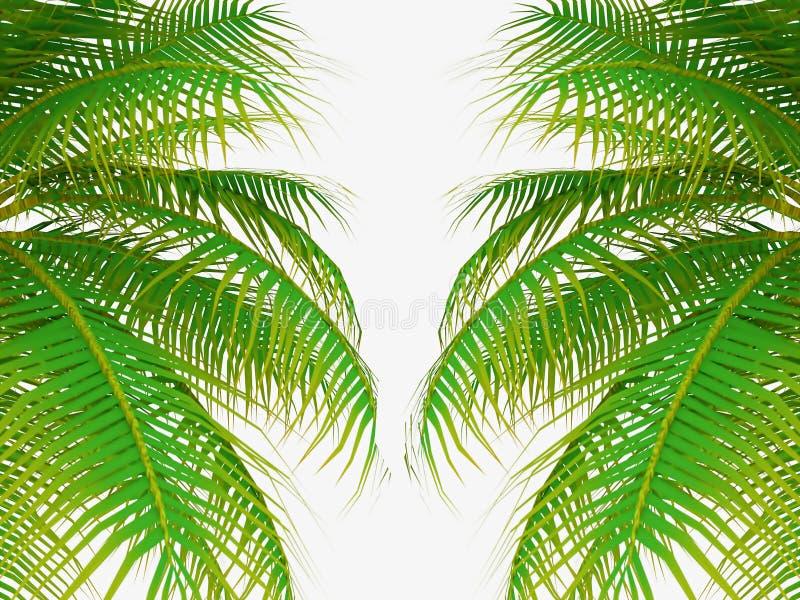 Drzewko palmowe liście ilustracja wektor