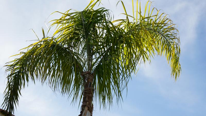 drzewko palmowe li?cie na niebieskiego nieba tle obrazy stock