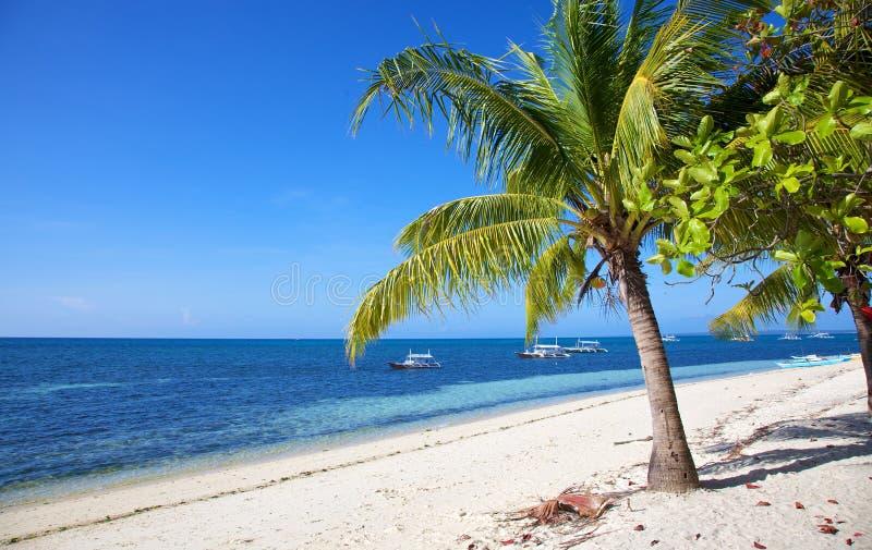 Drzewko palmowe na białego piaska tropikalnej plaży na Malapascua wyspie, Filipiny fotografia stock