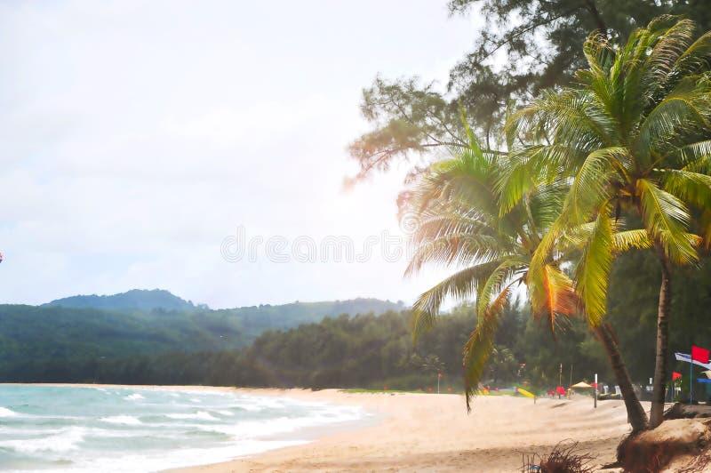 Drzewko Palmowe na Plażowym tle fotografia stock