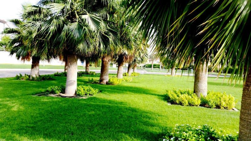 Download Drzewko Palmowe na Round obraz stock. Obraz złożonej z data - 57668269