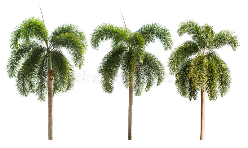 Drzewko palmowe odizolowywający zdjęcia stock