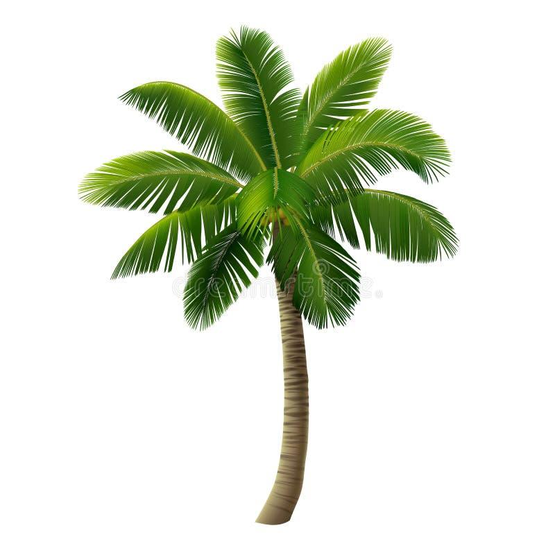 Drzewko palmowe odizolowywający na bielu ilustracja wektor