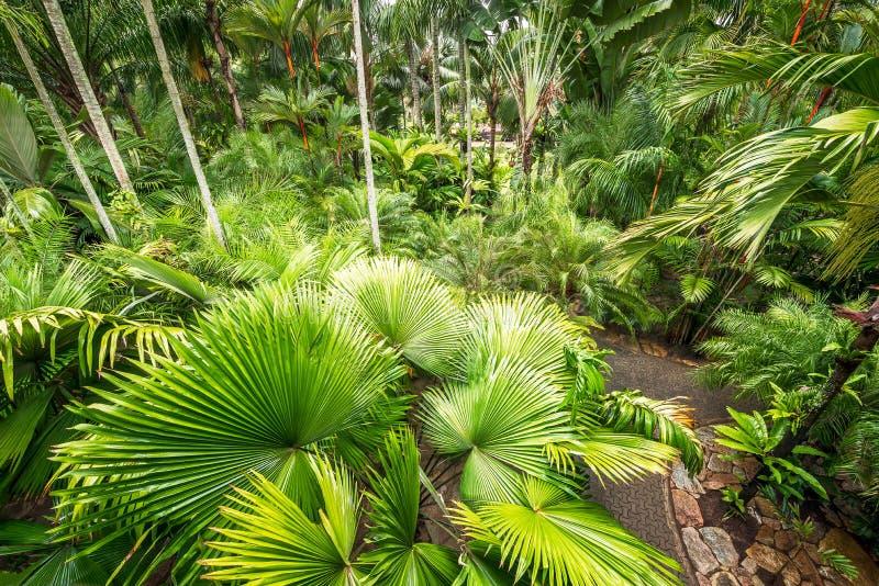 Drzewko palmowe ogród obraz royalty free