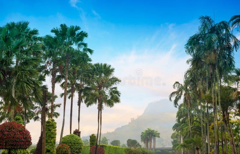 Drzewko palmowe ogród fotografia stock