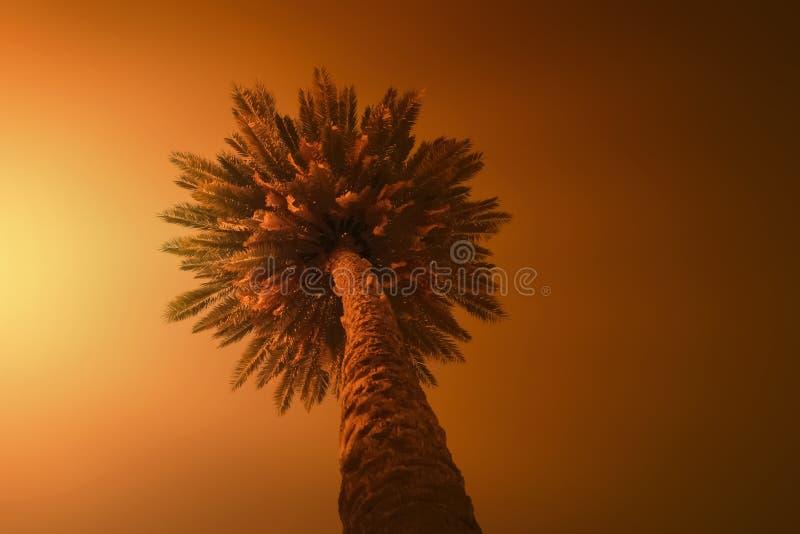 Drzewko palmowe pod pomarańczowym słońcem Upa?u poj?cie tonowanie zdjęcia stock