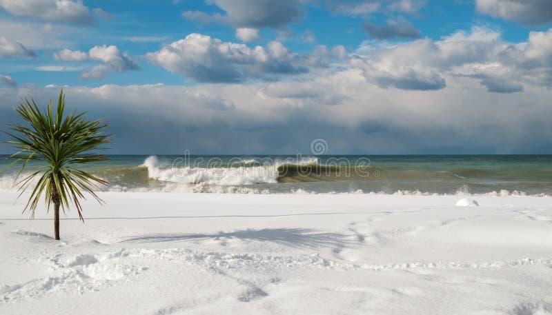Drzewko palmowe przy śnieg zakrywającą plażą zdjęcie royalty free