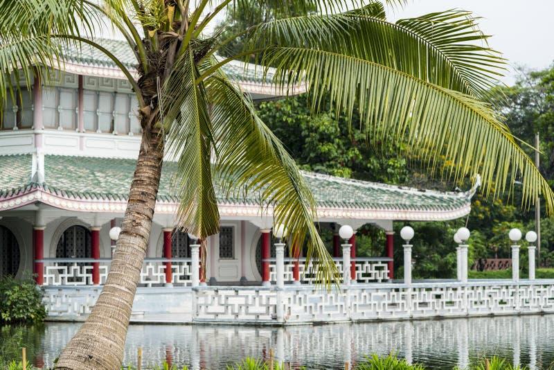Drzewko palmowe przy ogródem różanym z Chińskim dziedzictwo budynkiem zdjęcia stock
